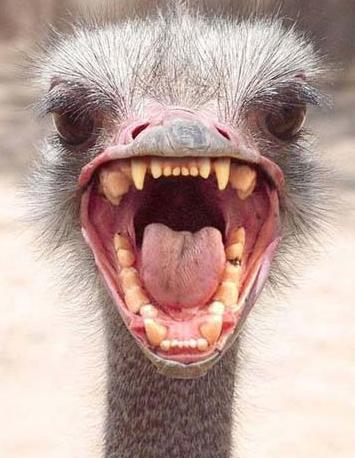 https://i0.wp.com/growabrain.typepad.com/growabrain/images/ostrich_head.jpg