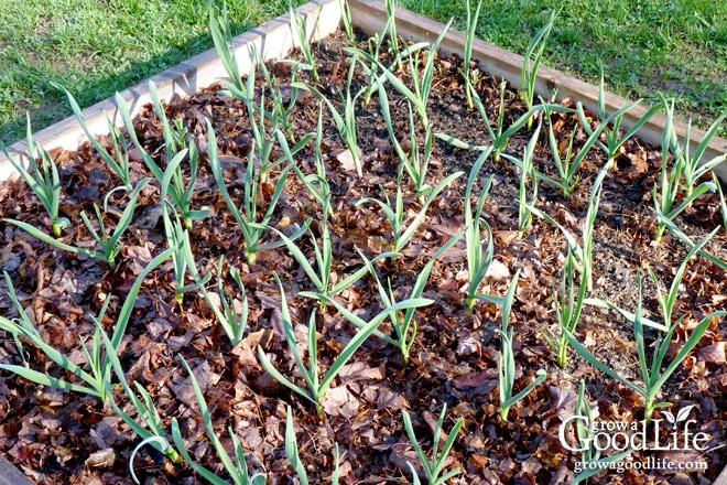 garden mulching tips seasoned