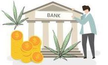 Banking and Cannabis