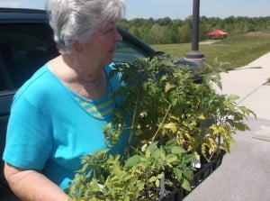 Sr. Citizen member checking the plants that will go in the beds