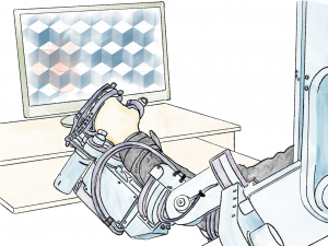 Paralysis Treatment with Robotic Devices
