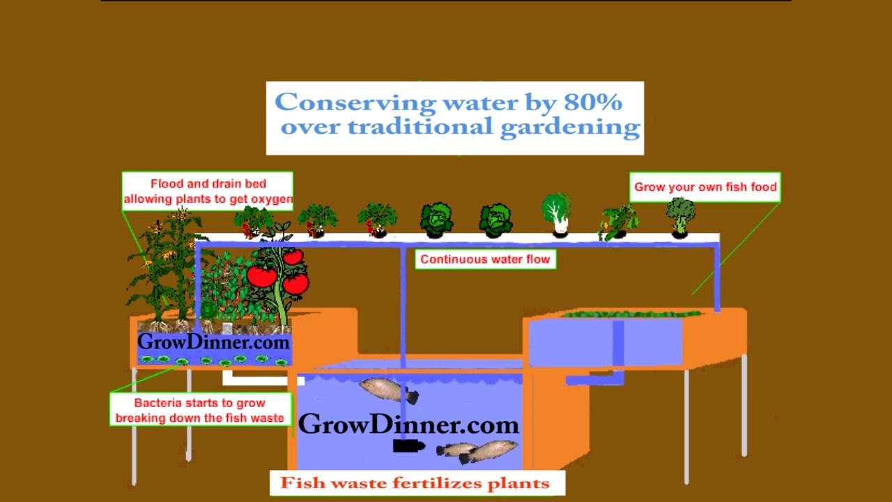 hight resolution of aquaponics