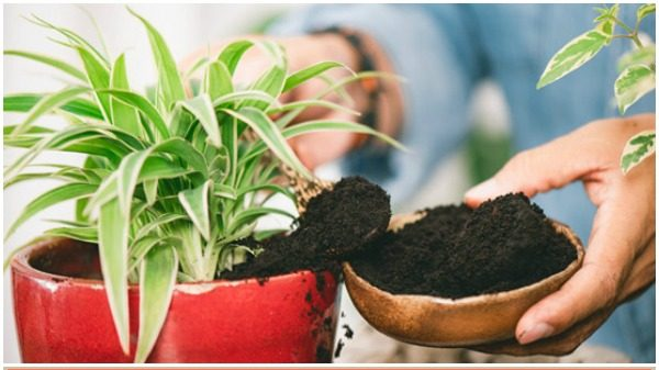 Smart Tip for Used Coffee Grounds