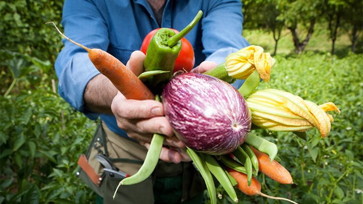 Best Vegetables To Plant During Summer