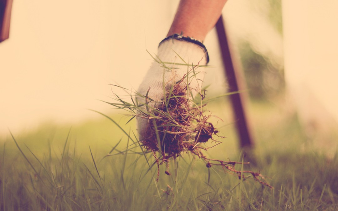 Top 5 Tips for Keeping Your Garden Weeds Away