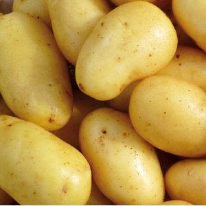 Potato Jazzy