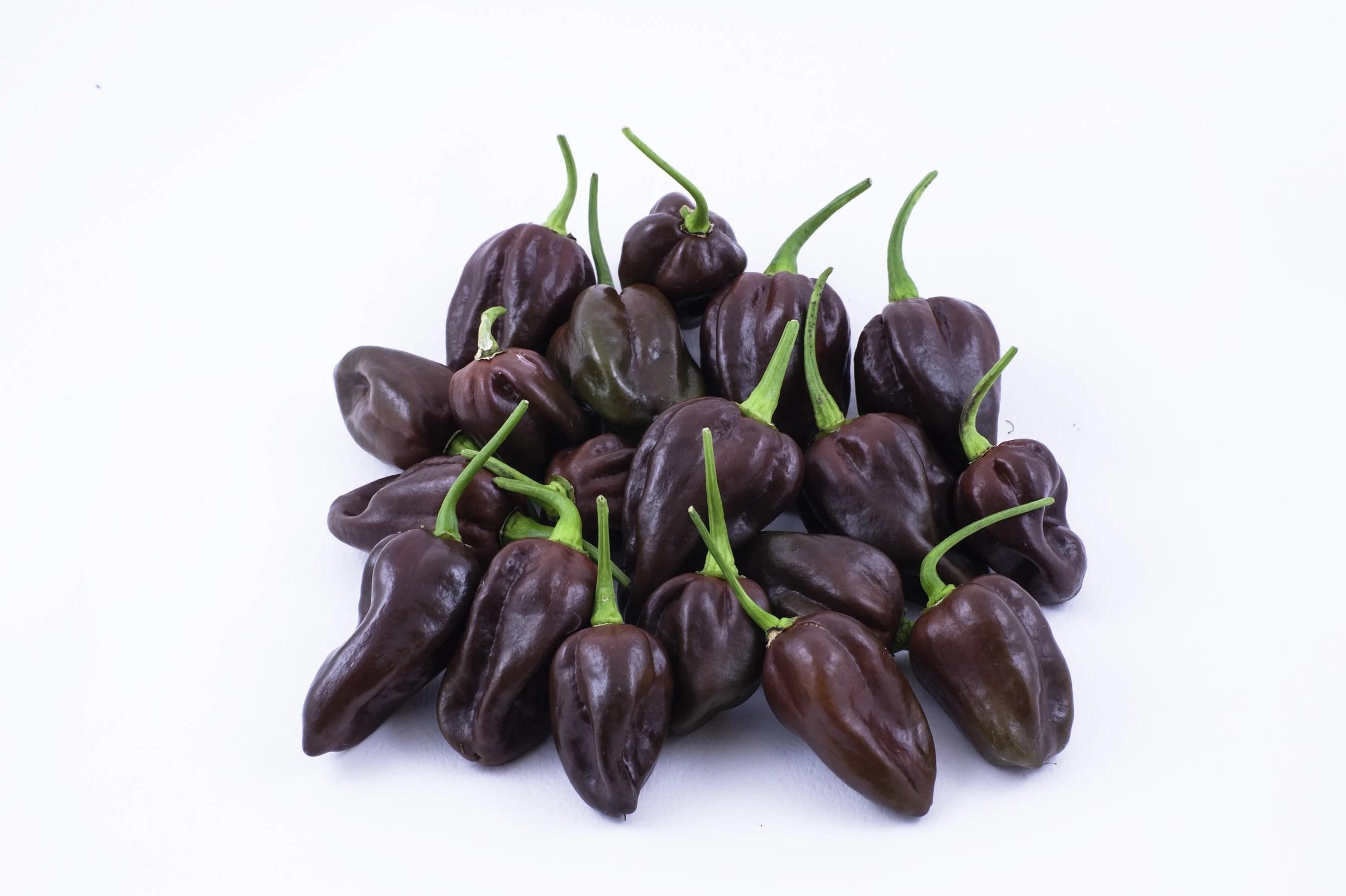 chocolate habanero peppers