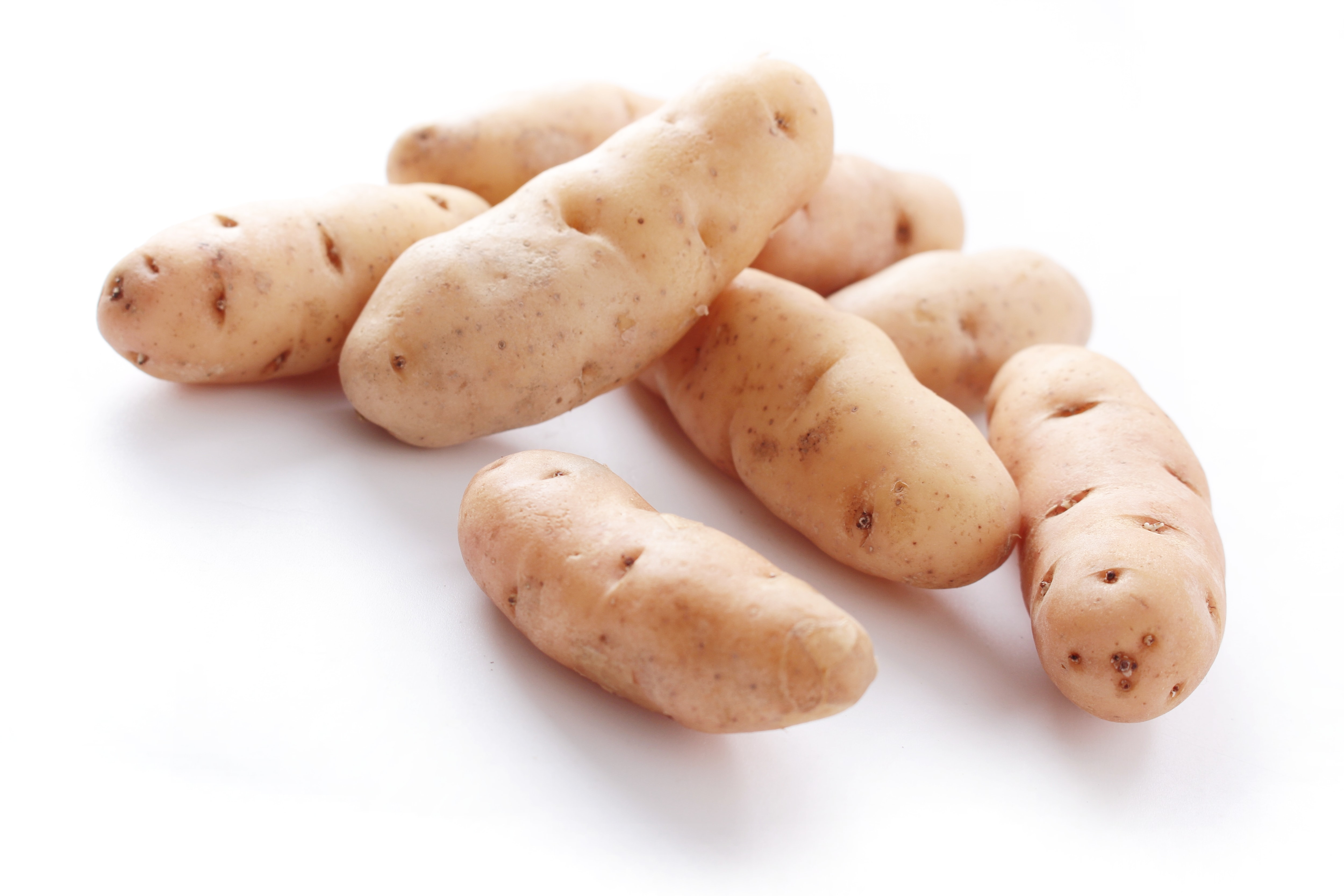 potatoes can be used to detect fungus gnat larvae