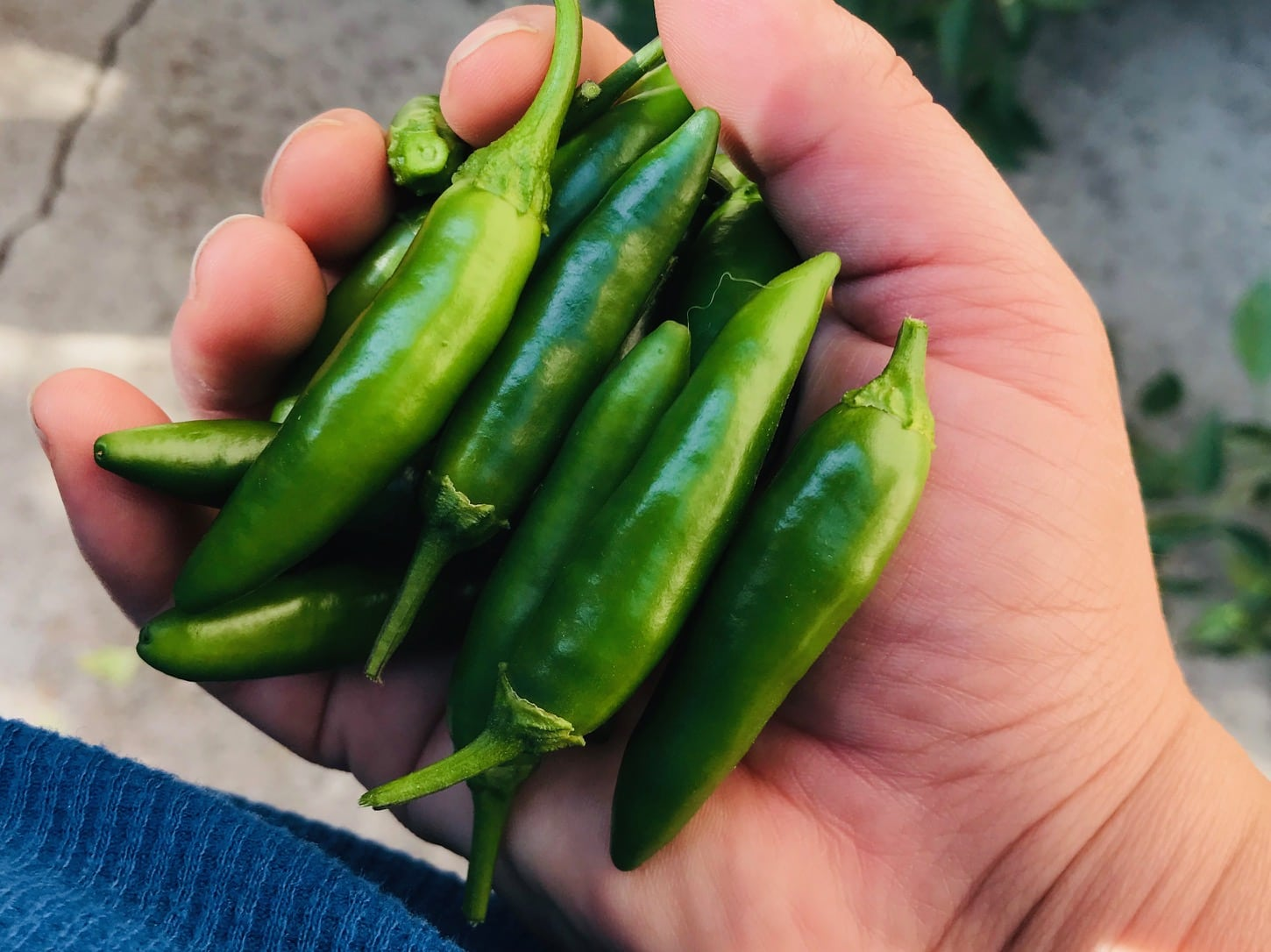 Best tasting peppers serrano peppers