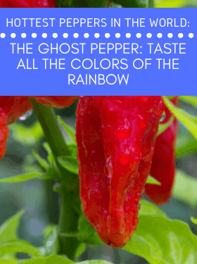 world's hottest peppers blog series image