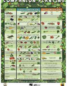 Florida companion planting chart also growin crazy acres rh growincrazyacres
