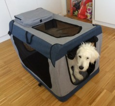 Nando the Goodle puppy - 19 weeks old, modelling the soft crate