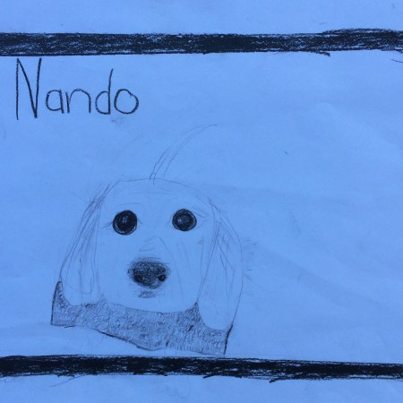Nando the Groodle puppy, drawn by a child with dog allergy