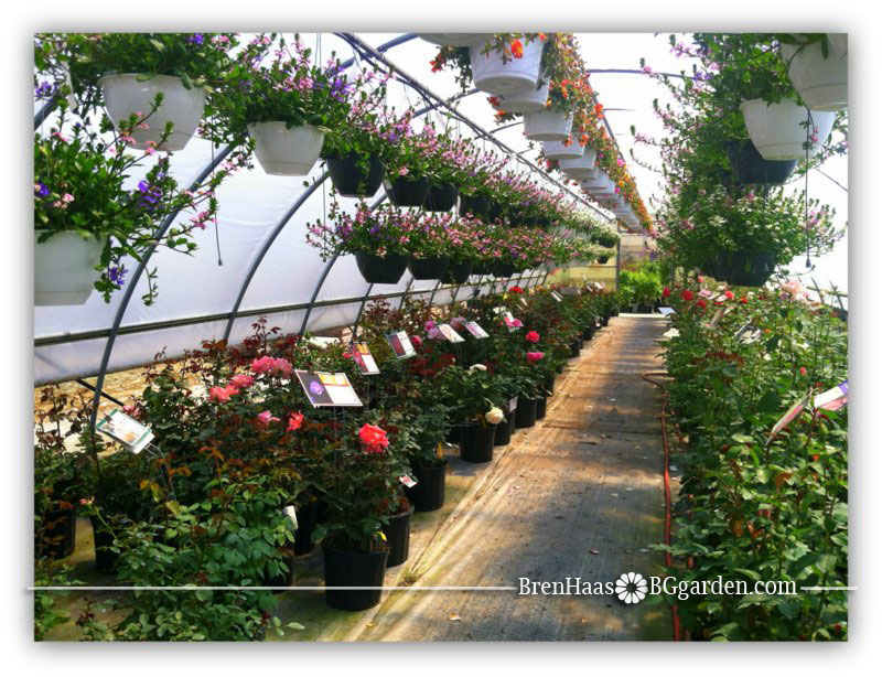 Greenhouse Road trip ... always sunny in the greenhouse!