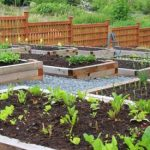 How to Plant Garden Vegetables to feed Your Family