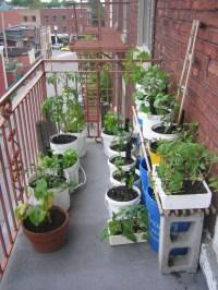 Balcony Gardening Notableca