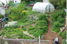 permaculturegardens1