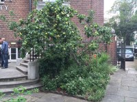 Apple tree with guild plants and container pond in rear