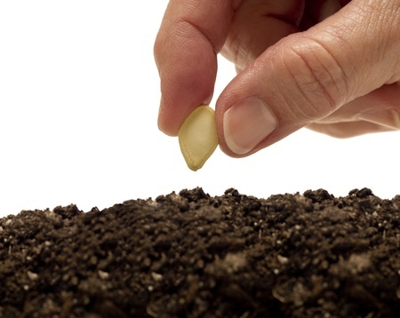 Discipleship Devotional Study Guide - Wisdom - 2 Corinthians 9:6-9 - Whoever Sows Generously Will Also Reap Generously - Growing As Disciples