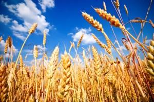 Discipleship Study - Prayer - Matthew 9:37-38- His Harvest Field- Growing As Disciples