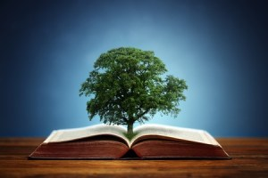 Discipleship Devotional Study Guide - Identity - Psalm 1:1-3 - Like A Tree - Growing As Disciples