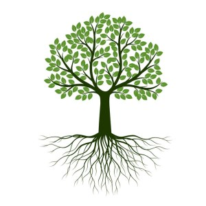 Discipleship Devotional Study Guide - Promises - Day 260- Colossians 2:6-7 - Let Your Roots Grow Down Into Him - Growing As Disciples
