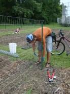 Grant building a pea trellace