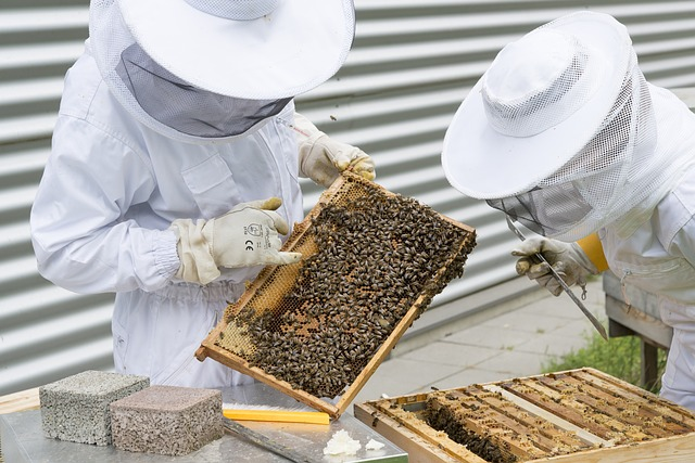 Intro To Beekeeping Growing Gardens