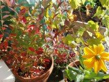 The colourful fruit bushes