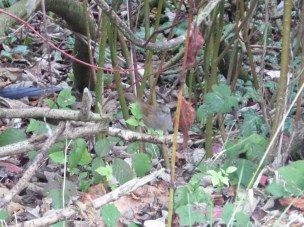 Spot the little bid - sparrow, I think?!