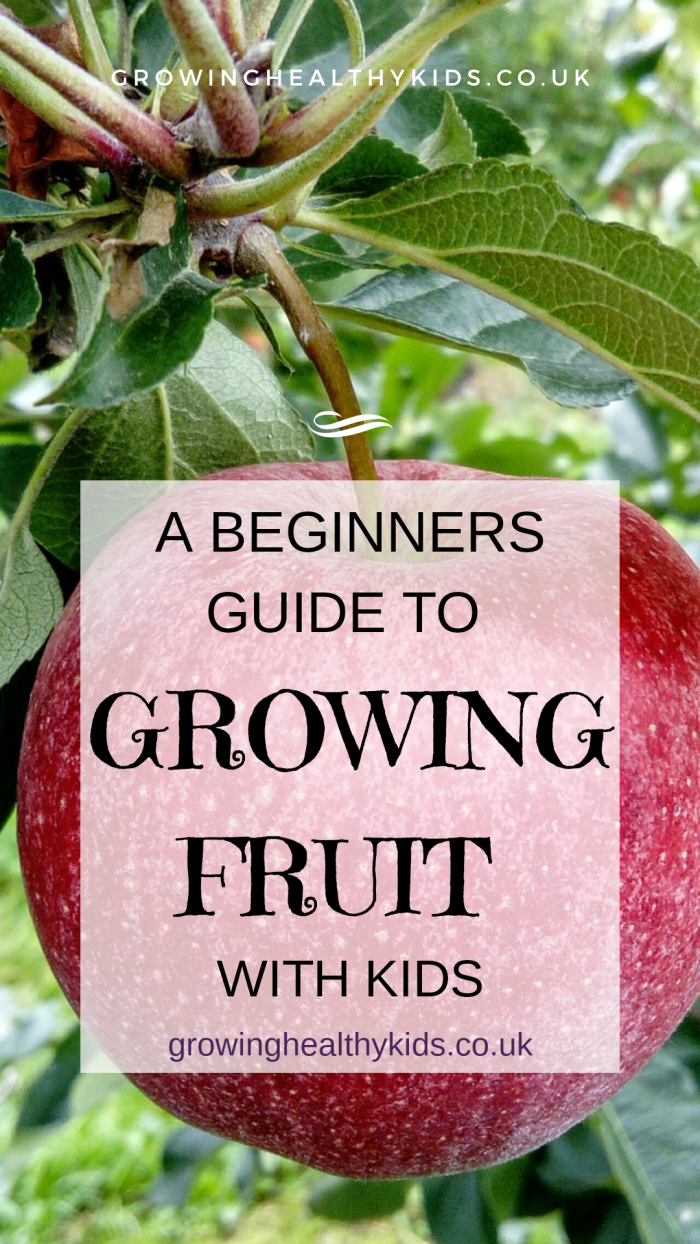 Growing patio fruit trees with kids is an easy and fun activity