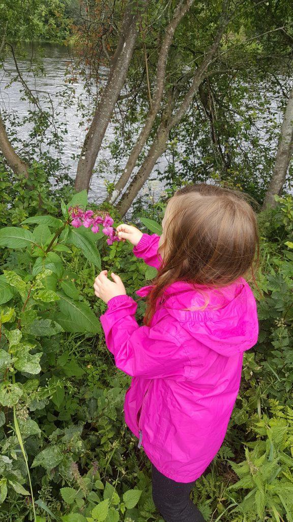 Riverside Fun With Kids-Himalayan Balsam food for free