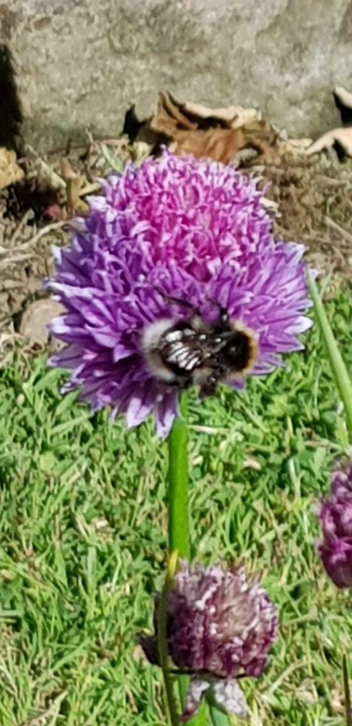 Save the bees with a children's garden