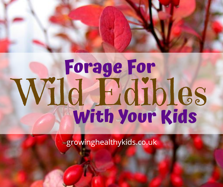 wild edibles to search for with your kids. easy to find in the woods or your local area make the best from foraging these edibles and make the easy recipes to add to your cupboards.