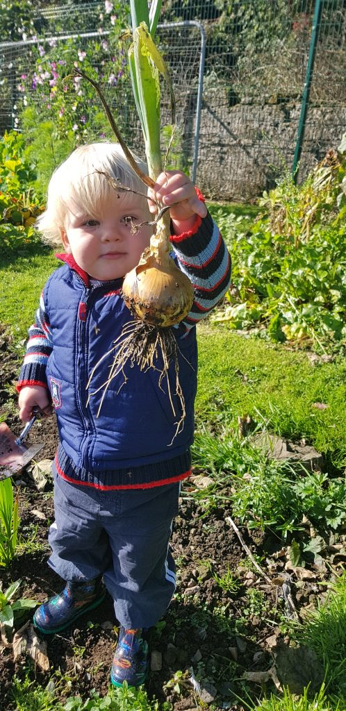 Vegetable gardening with kids is so much fun