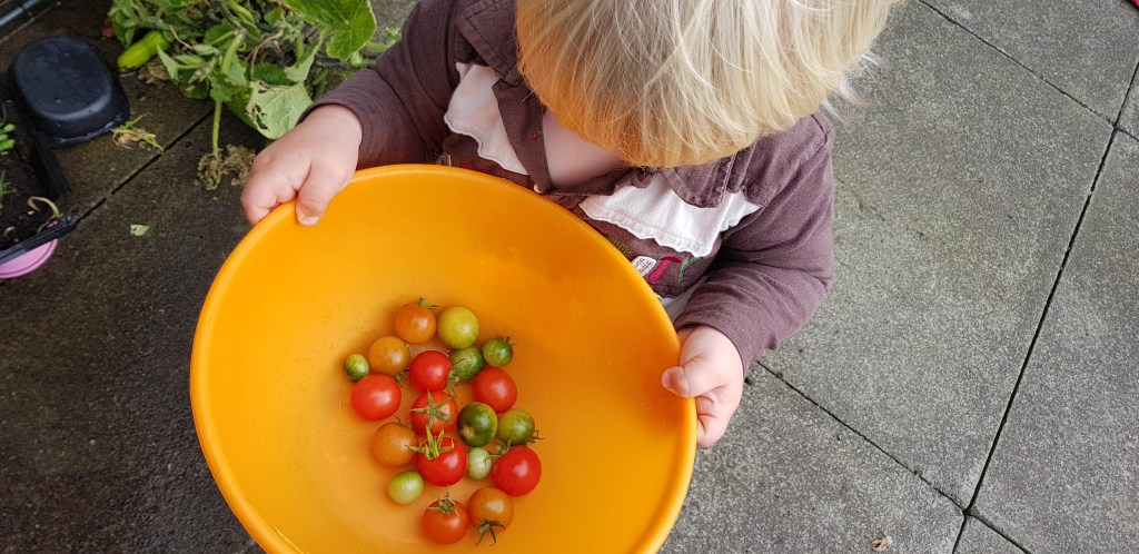 Grow your own food is so rewarding and easy for all the family to do with a little know how