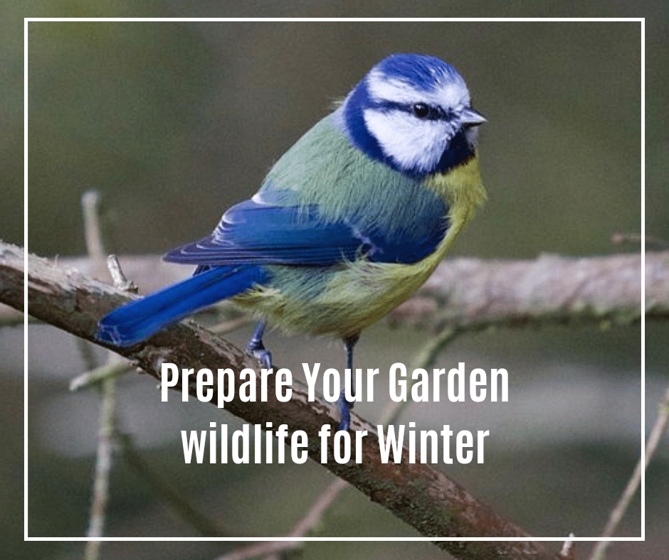 Prepare garden birds for winter by providing bird food, nests, birds boxes and other areas to keep them save and cosy