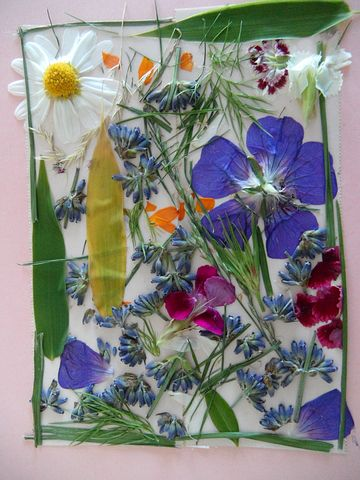 Pressed flower picture.