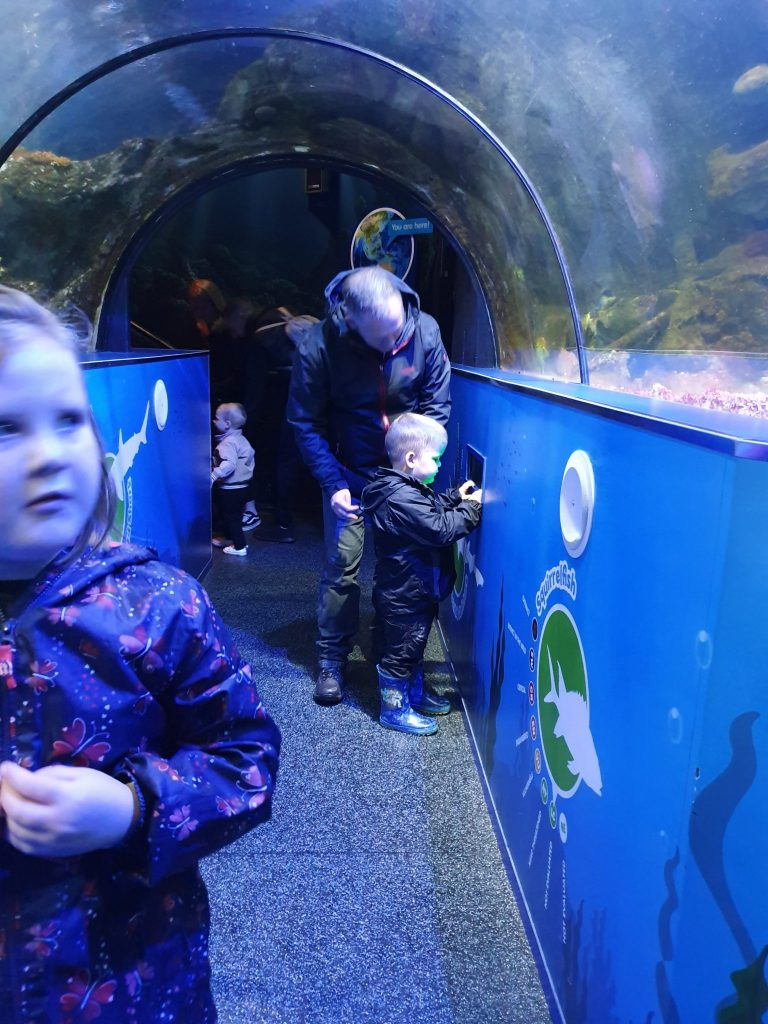 Make memories with these clutter-free gifts luke sealife centres or zoo