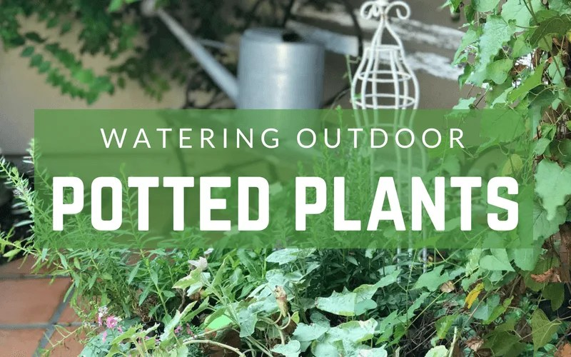 The Best Way To Water Outdoor Potted Plants Growing In The Garden