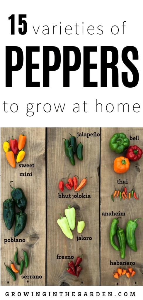 Pepper Varieties - Types of Peppers