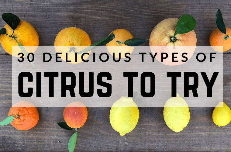 TYPES OF CITRUS TREES – VARIETIES OF CITRUS - Which type of citrus should I plant - #choosingcitrus #citrus