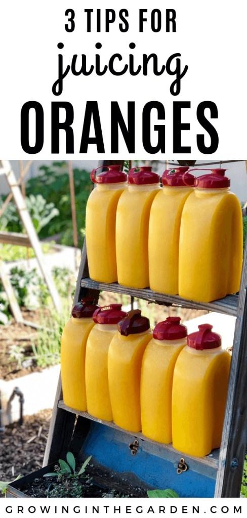 Three tips for juicing oranges #juicing #orangejuice #oranges #citrus