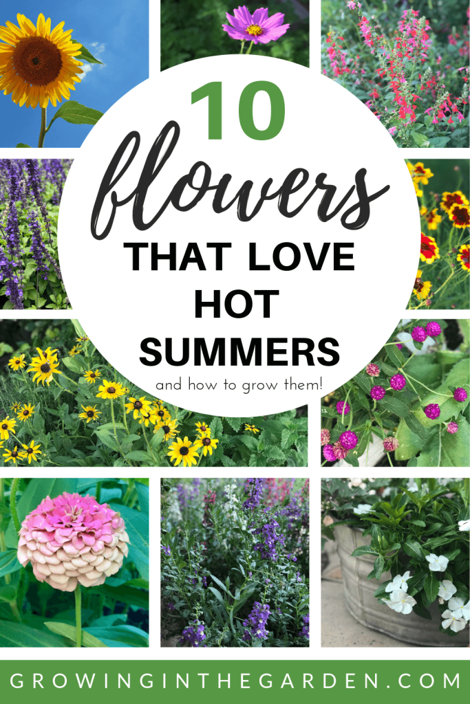 10 Flowers That Love Hot Summers And How To Grow Them Growing