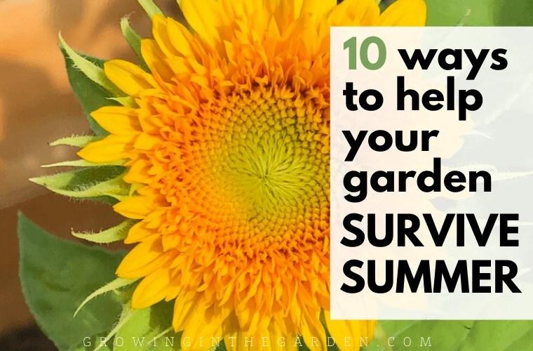 10 Ways to Help Your Garden Survive Summer