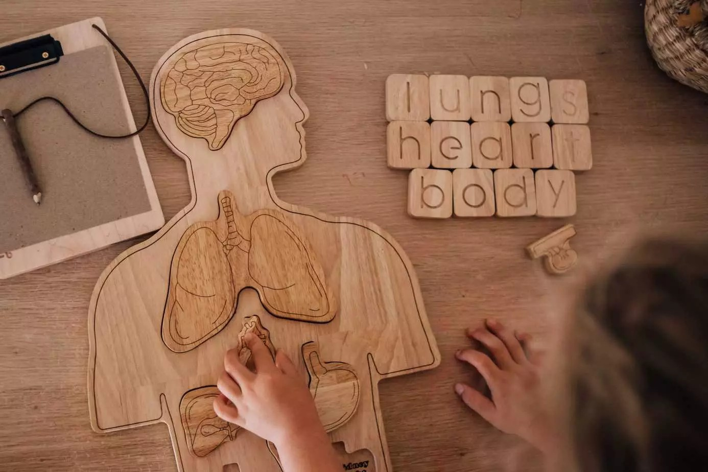 Wooden Anatomy Human Body Puzzle Growing Kind