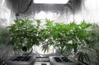 Best marijuana grow tent 2017 - Growing Marijuana Pro