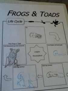 notebooking for K5