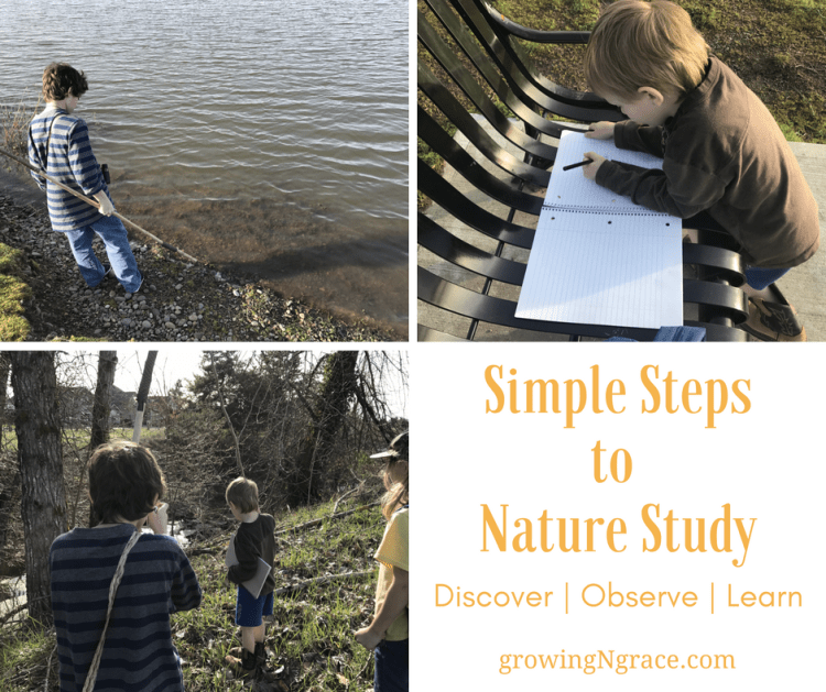 steps to nature study | nature study resources & tips