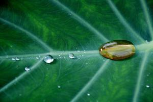 Botanical Tea to Repel Pests